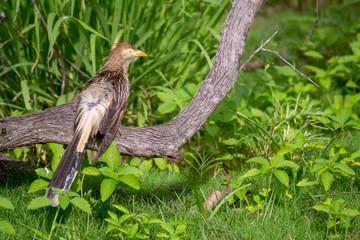 bird on grass