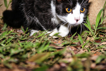 Cat's black & White