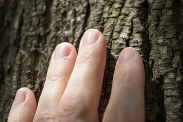 Close up of woman's hand touching tree trunk