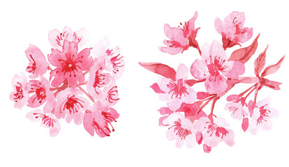 Watercolor set with branch of delicate pink blooming flowers, bud and leaves isolated on white background. branch of cherry blossoms.