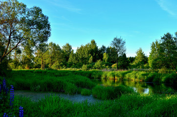 Summer landscape on a fabulous little river inside a wilderness forest against the evening sunset and the bright rays of the sun. Republic of Belarus, Borb River. Natural landscape scenery
