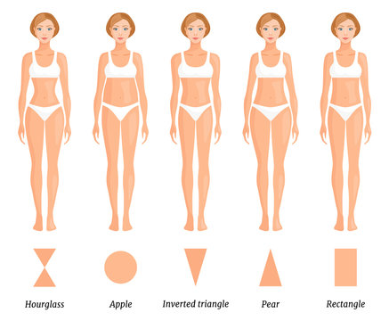 Forms of female body type. Various figures of women. Vector.