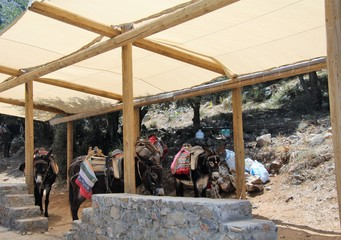 donkeys-vehicle to the cave of Zeus