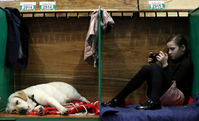 A girl rests next to a sleeping Labrador Retriever during the first day of the Crufts Dog Show in Birmingham