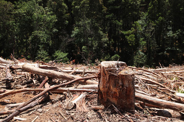 Deforestation (environmental destruction) concept image consisting of felled trees.