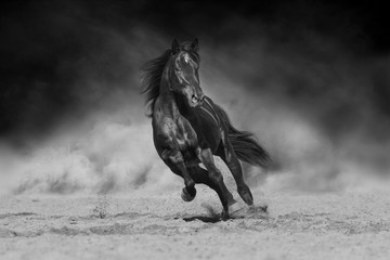 Black stallion run on desert dust against dramatic background. Black and white Wall mural