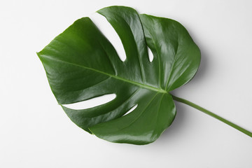 Leaf of tropical monstera plant on white background, top view