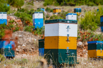 Colorful beehives in a field with trees in Greece