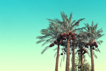 Palm trees against the backdrop of a blue sky