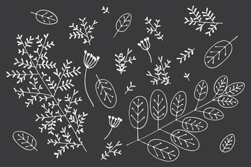 Small garden leaves, branches silhouettes, sketch elements set