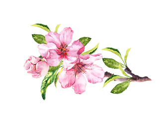 Pink sakura blossom, flourish spring twig of almond, cherry, apple . Floral water color