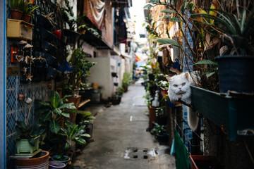 Kot na ulicy
