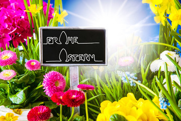 Sunny Spring Flower, Calligraphy Frohe Ostern Means Happy Easter