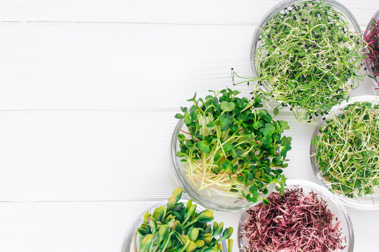 Micro greens of radish, amaranth, mustard, beetroot and onion in glass bowls