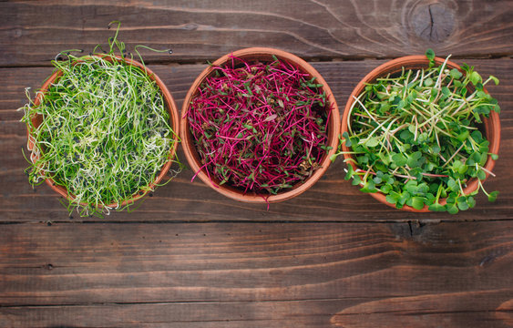 Sprouts of onion, radish and beetroot in ceramic bowl on rustic wooden background