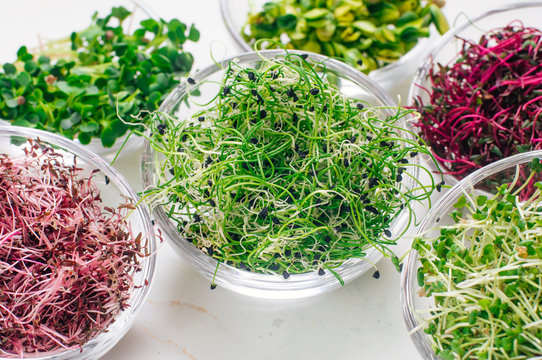 Micro greens sprouts of onion and other sprouts in glass bowls