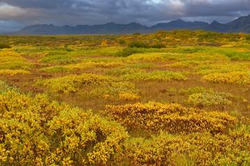 herbstliche Landschaft bei Pingvellir, Island