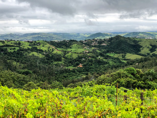 Top view of the vineyards in the mountain during cloudy raining season. Grapevines in the green hills. Vineyards for making wine grown in the valleys on rainy days and fog blowing through.