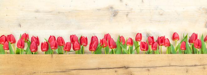 Tulpen vor Holzhintergrund