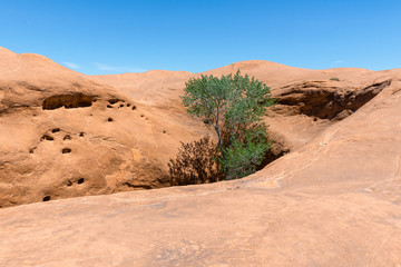 Tree growing in a pit,  Dance Hall Rock in Grand Staircase-Escalante National Monument, Utah, USA