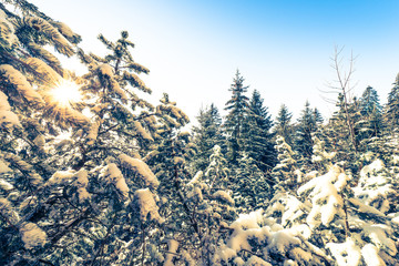 Joyful winter day in the snowy forest before the Christmas holiday. Switzerland.