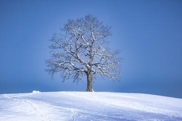 beautiful lonely tree on a snowy hill in winter season
