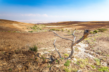 Wall Mural - Dead dry desert tree plant arid landscape.