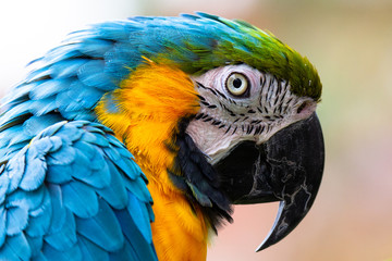 Foto op Canvas Papegaai Parrot / Macaw Close Up
