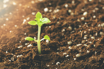new seedling growing in fertile soil closeup