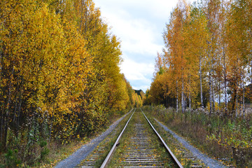 railway in the autumn forest stretching into the distance