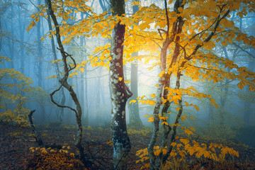 Wall Mural - fantasy forest in autumn with yellow leaves