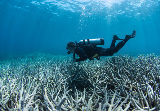 Scuba diver over bleached coral