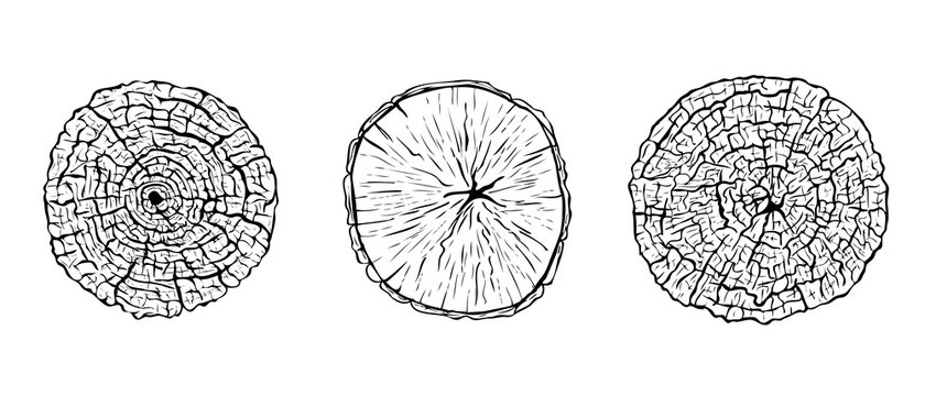 Set of hand drawn sketched cut tree trunks with annual rings. Black and white vector illustration of wood texture