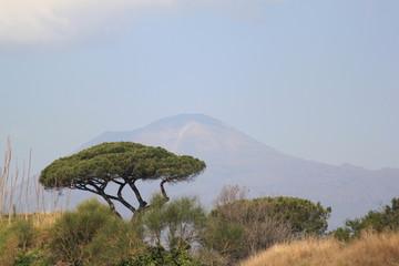 Vesuvio Napoli con pino marittimo