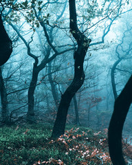 Tree trunks and undergrowth in mist