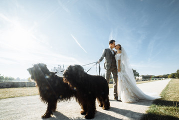 Beautiful wedding couple is kissing. Newlyweds are holding a leash of two large black dogs outdoors