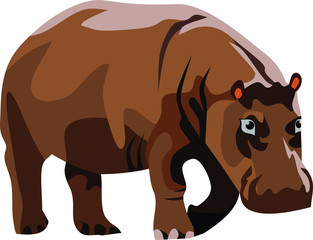 Hippopotamus Mammal Animal Vector