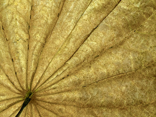 Natural yellow dry leaves. fine details and very high-res backgrounds