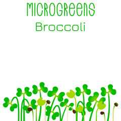 Microgreens Broccoli. Seed packaging design. Sprouting seeds of a plant