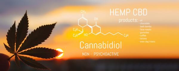 Hemp CBD oil, Medical marijuana products including cannabis leaf. Herbal organic medicine product. Natural herb essential from nature. Chemical formula of cannabidiol