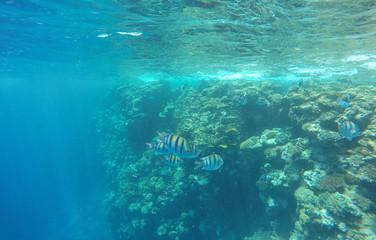 Blue sea underwater view