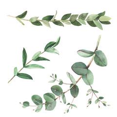 Eucalyptus twigs watercolor illustrations