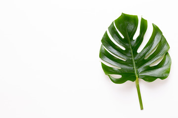 Tropical Jungle Leaf, Monstera, resting on flat surface, on white wooden background.