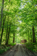 Sunny spring in the green forest in Poland