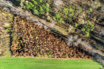 Flying above wonderful forest with multicolored trees, Europe
