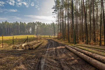 Cut wood at the edge of forest in spring, Poland