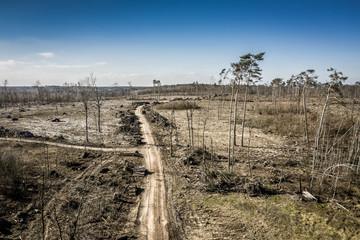 Aerial view of terrible deforestation, logging, environmental destruction, Poland