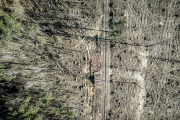 Flying above terrible deforestation, logging, environmental destruction, Poland