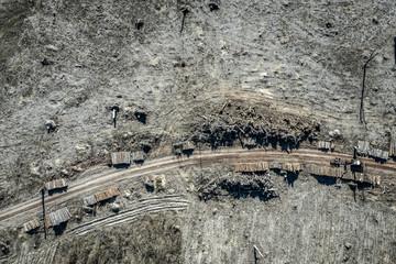 Aerial view of horrible deforestation, destroyed forest for harvesting, Poland