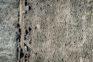 Aerial view of horrible deforestation forest for harvesting, Europe